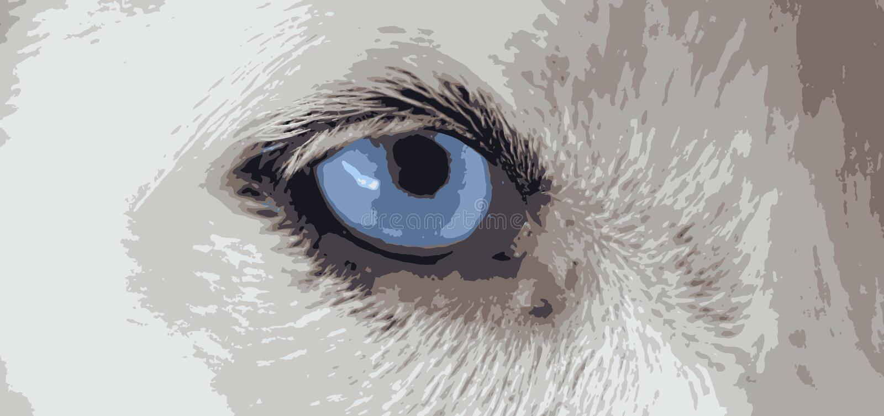 Vettori dell'occhio azzurro del cane royalty illustrazione gratis