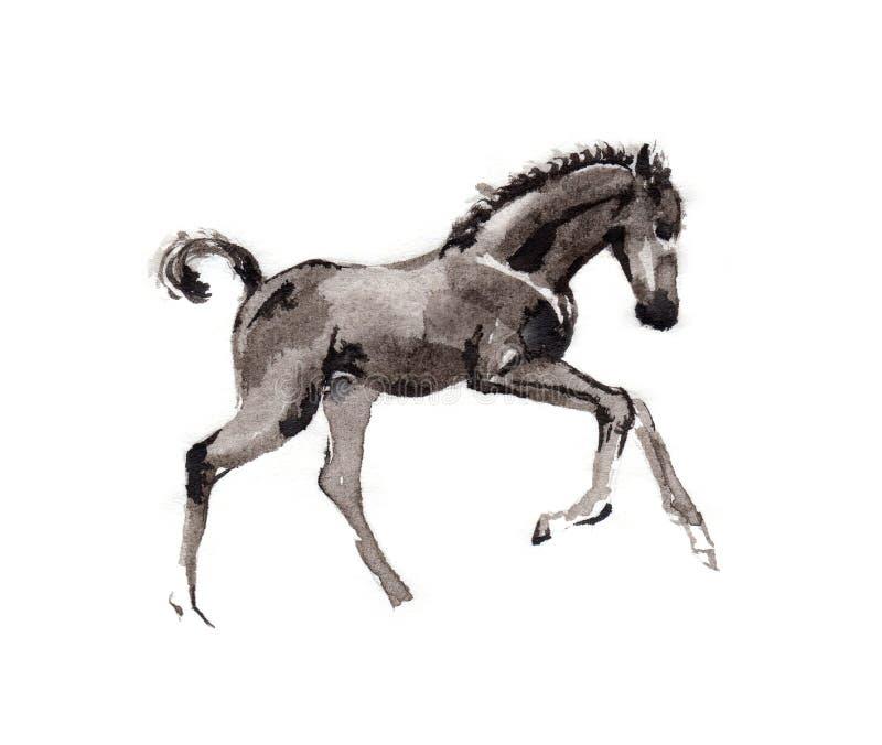 Veulen het oosterse inkt schilderen, sumi-e stock illustratie