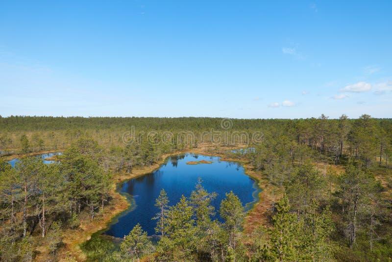 Vew do pântano estônio de Viru Raba com diversos lagos pequenos e floresta conífera dos abetos e dos pinhos imagens de stock royalty free