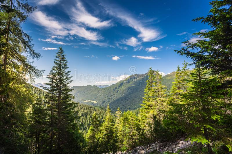 Vew vom Wald in den Alpen nahe San Martino di Castrozza stockfotos
