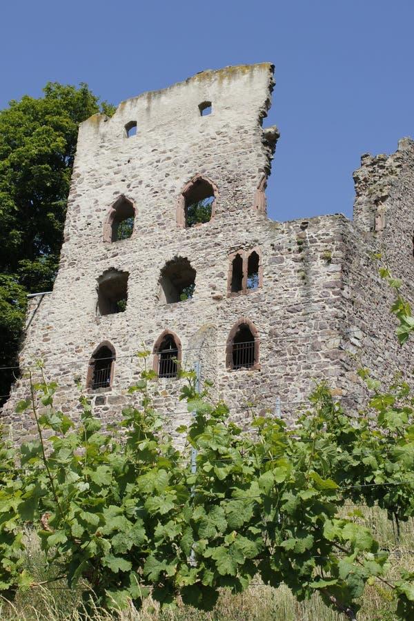 Download Viñedo foto de archivo. Imagen de medieval, campos, cultivador - 41906674