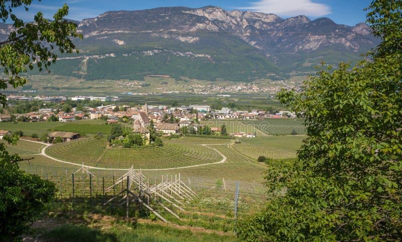 Viñedo circular característico en el Tyrol del sur, Egna, Bolzano, Italia en el camino del vino fotos de archivo libres de regalías