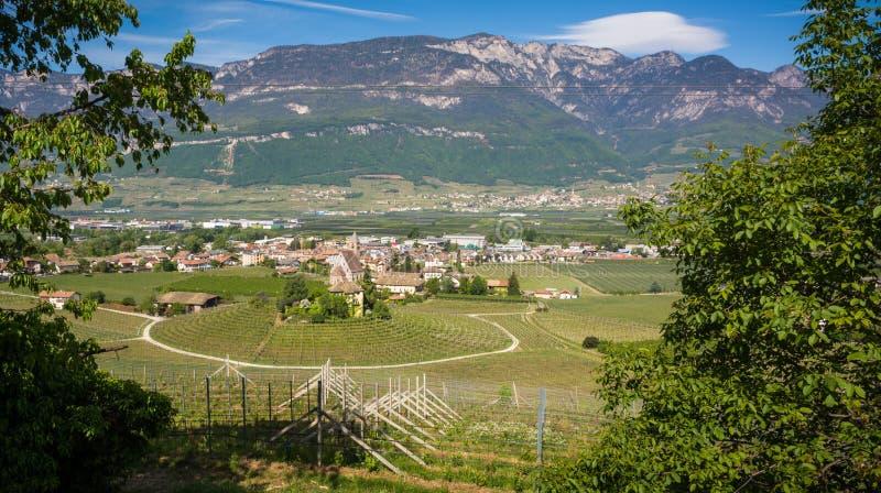 Viñedo circular característico en el Tyrol del sur, Egna, Bolzano, Italia en el camino del vino fotografía de archivo libre de regalías