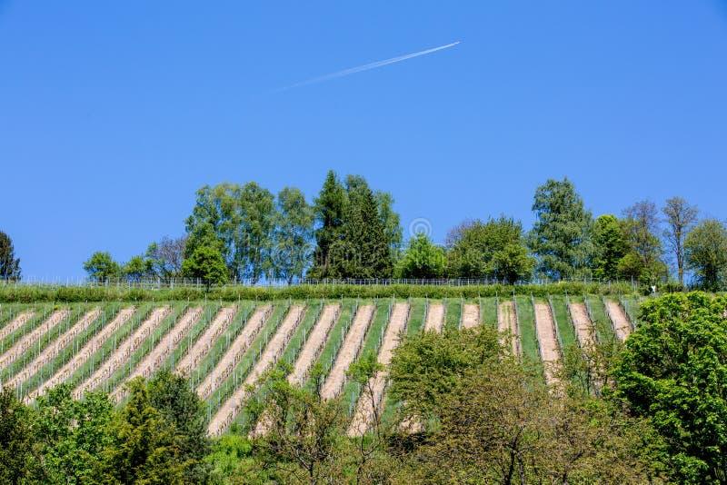 Viñedo con el cielo azul y el avión que pasan cerca fotos de archivo