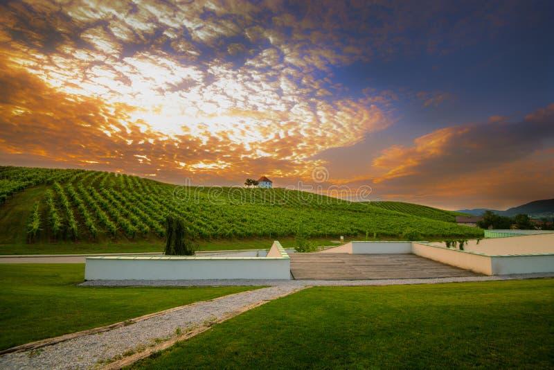 Viñedo con filas de la vid de uva en la salida del sol, puesta del sol con el edificio viejo, chalet encima de la yarda de la vid imágenes de archivo libres de regalías