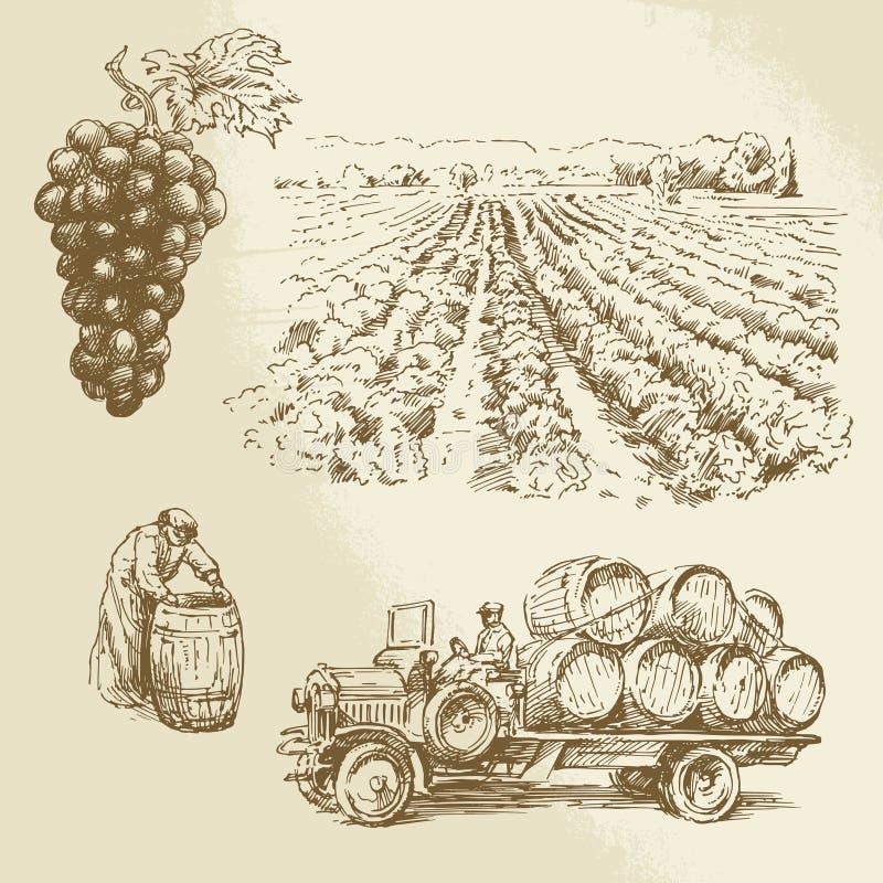 Viñedo, cosecha, granja ilustración del vector