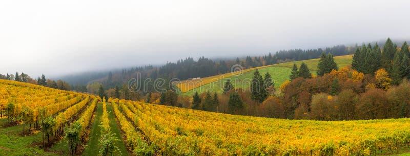 Viñedo de Dundee Oregon durante panorama de la temporada de otoño imágenes de archivo libres de regalías