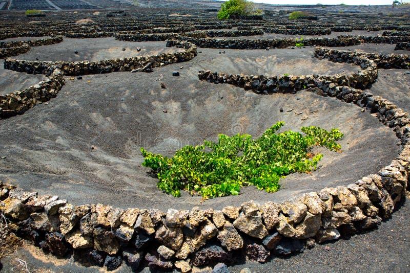 Viñedo de Geria del La de Lanzarote en suelo volcánico negro fotos de archivo libres de regalías