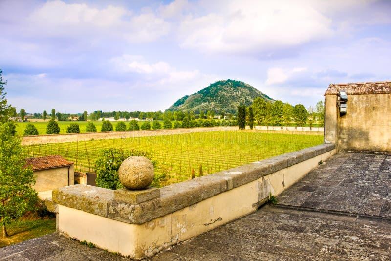 Viñedo del praglia de las colinas de Euganean - Padua - Véneto - Italia fotos de archivo libres de regalías