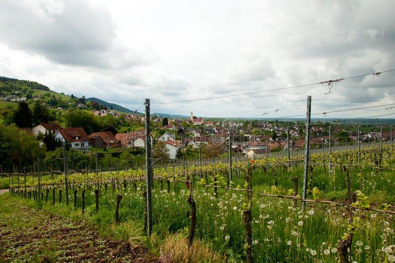 Viñedo en Alemania, Baden foto de archivo