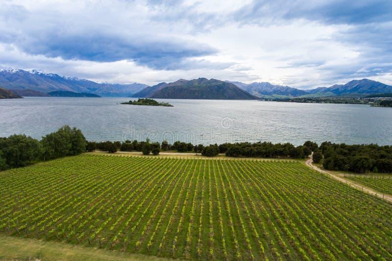 Viñedo en el lago Wanaka, Nueva Zelanda fotos de archivo