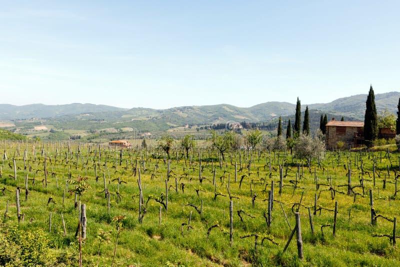 Viñedo en la región de Chianti de Toscana, Italia fotografía de archivo libre de regalías