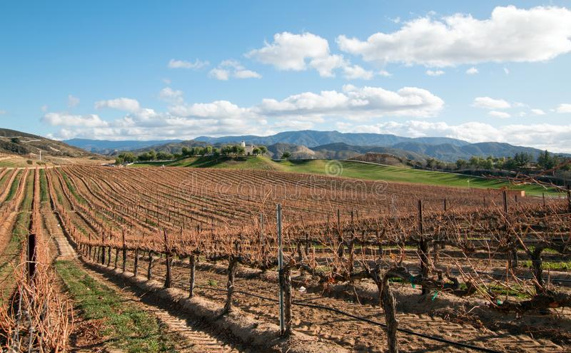 Viñedo en la región de crecimiento de vino de California en los E.E.U.U. fotografía de archivo