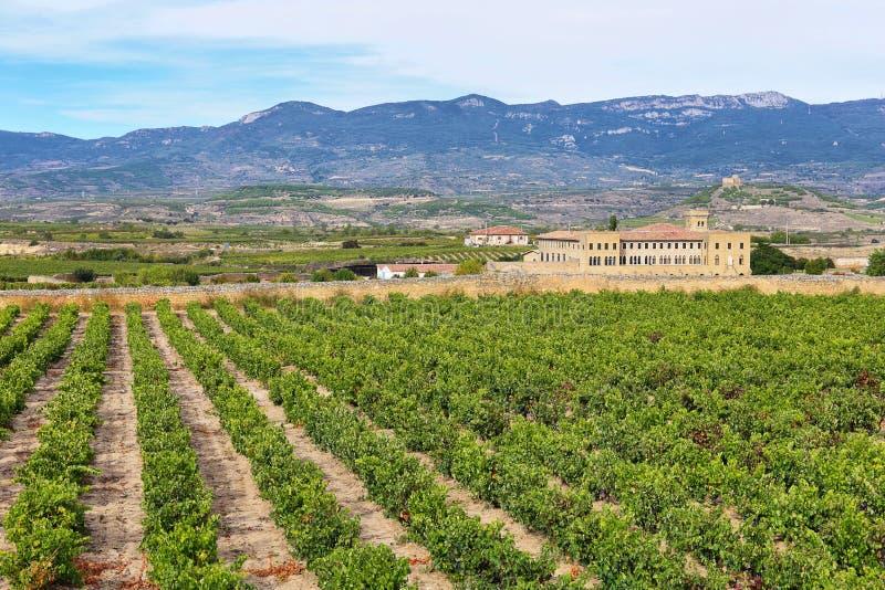 Viñedo en La Rioja, el vino más grande produciendo la región en España foto de archivo