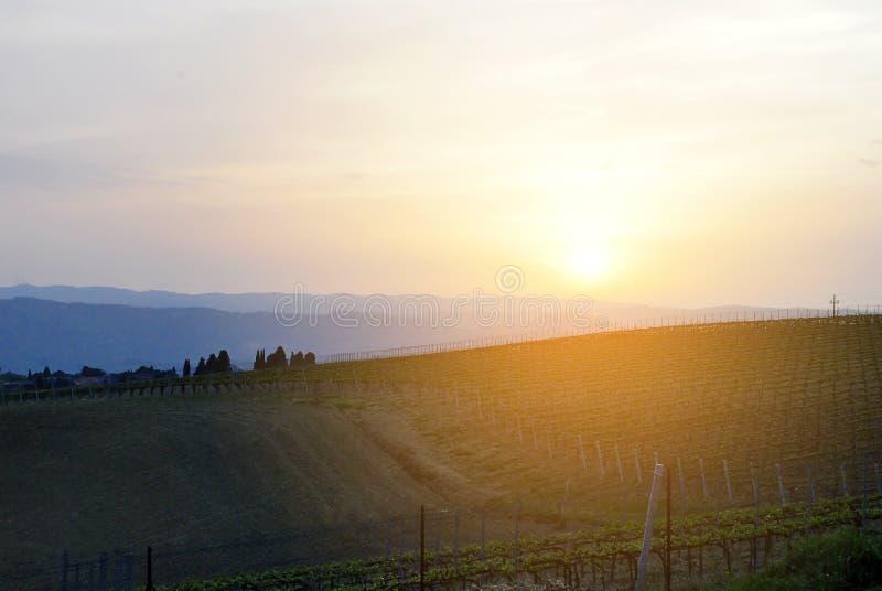 Viñedo italiano en la puesta del sol foto de archivo libre de regalías