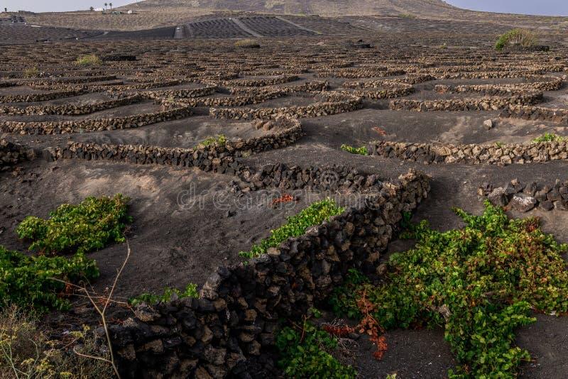 Viñedo Lanzarote, España, islas Canarias foto de archivo libre de regalías