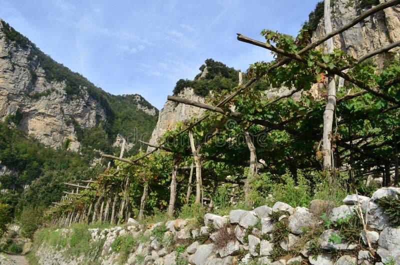 Viñedo a lo largo de la trayectoria de dioses en Amalfi imagenes de archivo