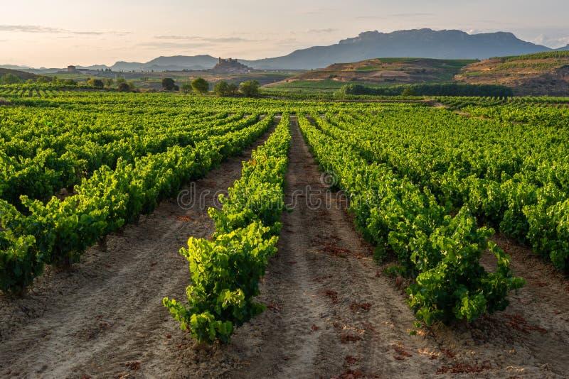 Viñedo, San Vicente de la Sonsierra como fondo, La Rioja, España imagen de archivo libre de regalías