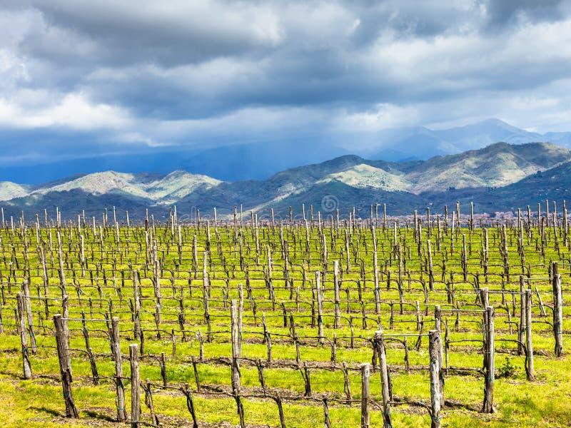 Viñedo vacío en la región de la vinificación del Etna en primavera foto de archivo