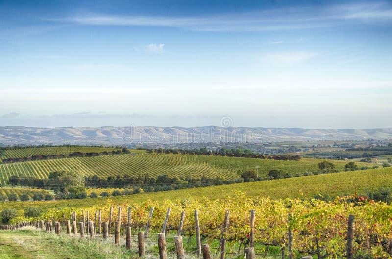 Viñedo y horizonte en el valle de McLaren, sur de Australia fotografía de archivo libre de regalías