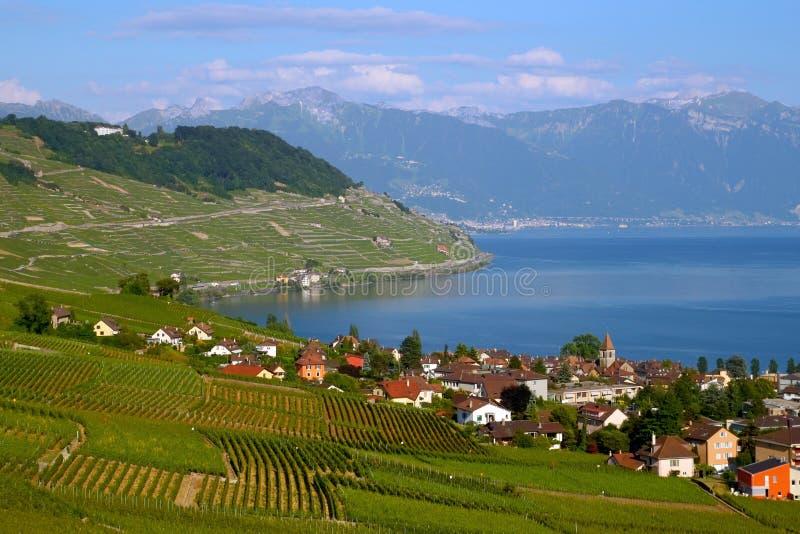 Viñedos de Lavaux en el lago Ginebra, Suiza fotos de archivo