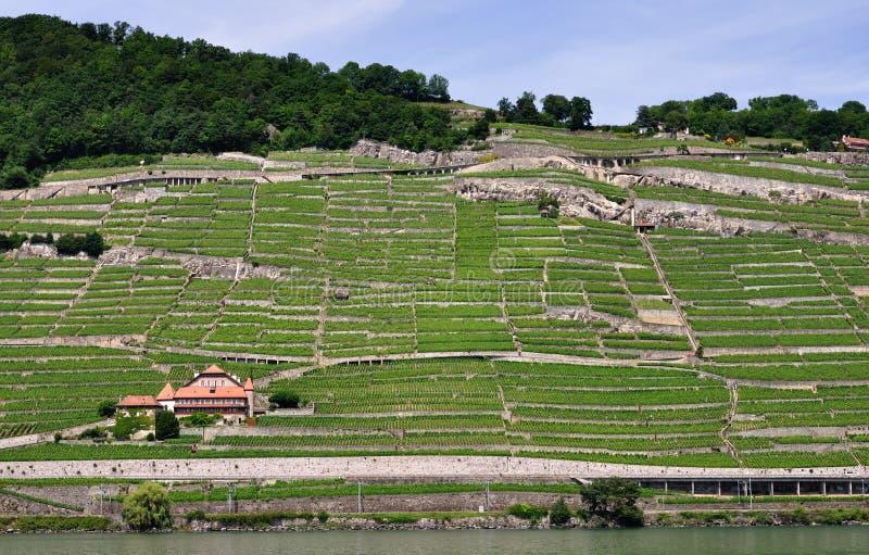 Viñedos de Lavaux, lago geneva, Suiza imagen de archivo