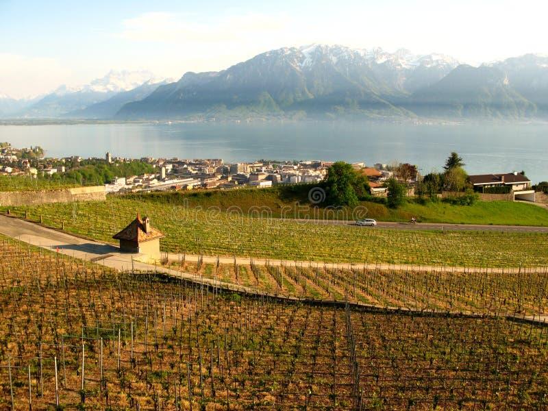 Viñedos de Vevey Suiza fotos de archivo libres de regalías
