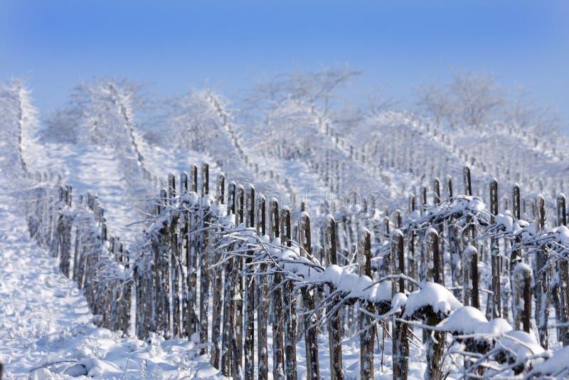 Viñedos del invierno imagen de archivo