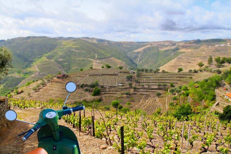 Viñedos del vino de Oporto imágenes de archivo libres de regalías