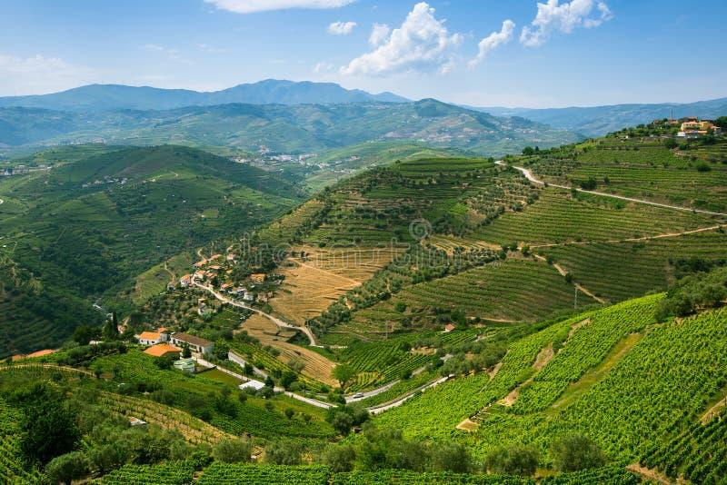 Viñedos en colinas Panorama del valle del Duero foto de archivo