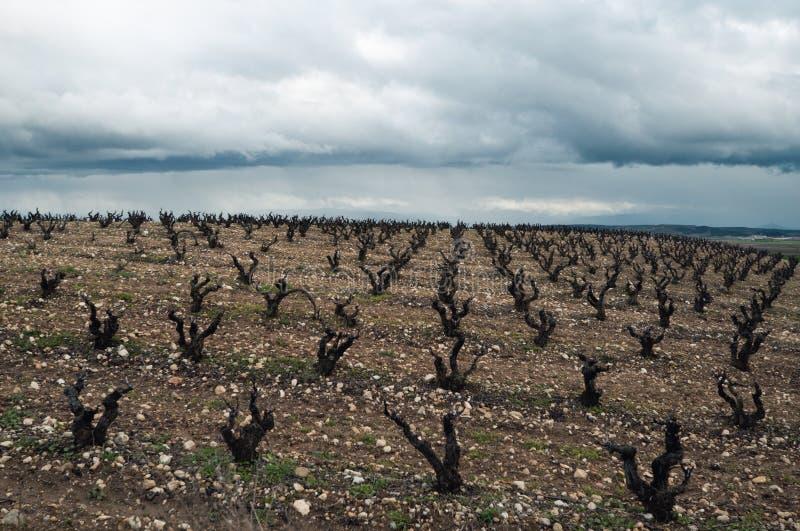 Viñedos en día nublado del invierno. La Rioja imágenes de archivo libres de regalías