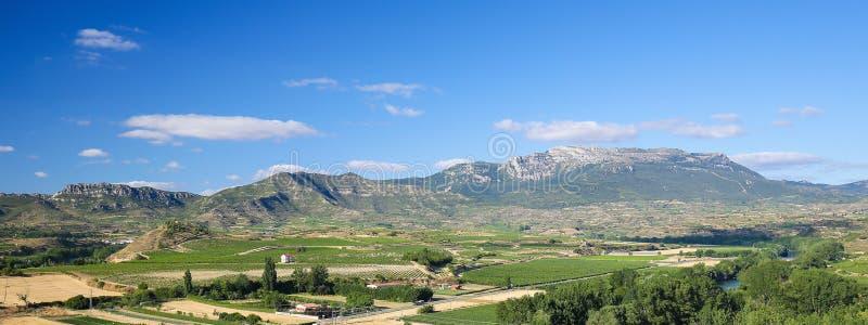 Viñedos en el Haro, La Rioja, España imágenes de archivo libres de regalías