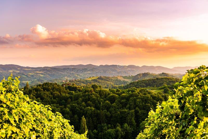 Viñedos en Eslovenia cerca de la frontera con el sur Estiria de Austria imagen de archivo