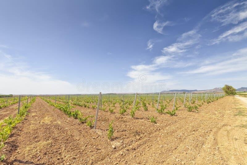 Viñedos en la región de La Rioja en España imagen de archivo