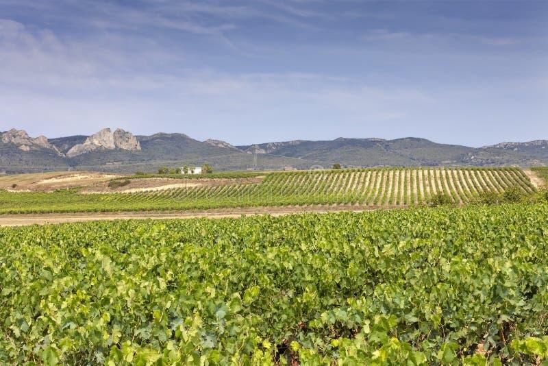 Viñedos en la región de La Rioja en España fotos de archivo