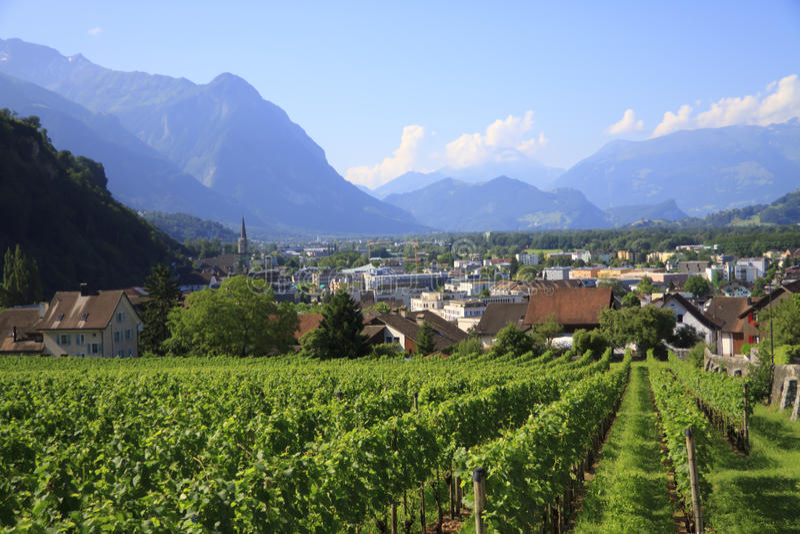 Viñedos. Liechtenstein imagenes de archivo