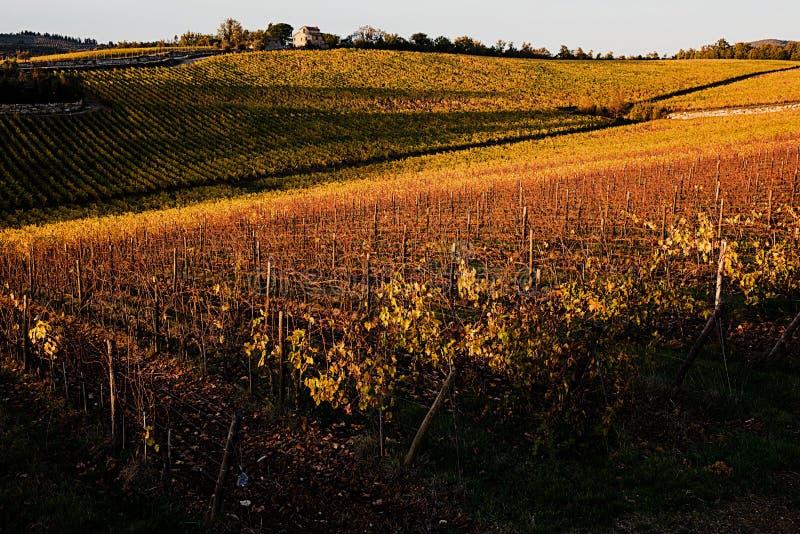 Viñedos otoño, sol del ` s de Chianti imagen de archivo libre de regalías