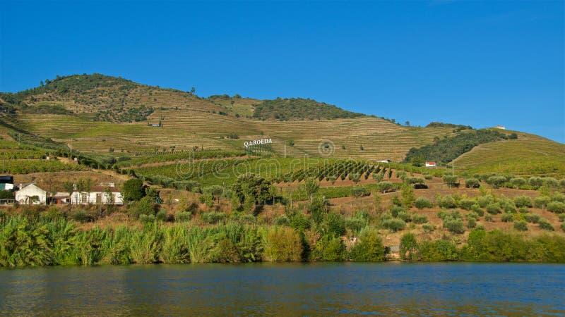 Viñedos para la producción de vino de Oporto en el valle del Duero al lado del río del Duero en Portugal imágenes de archivo libres de regalías