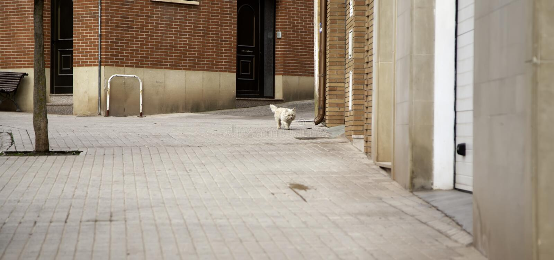 Via abbandonata del cane fotografia stock libera da diritti