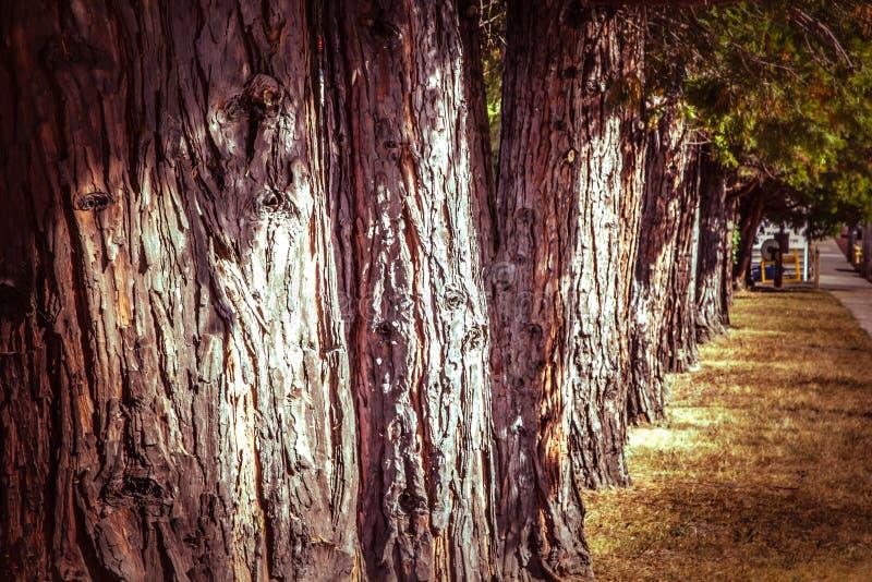 Via allineata con gli alberi fotografia stock