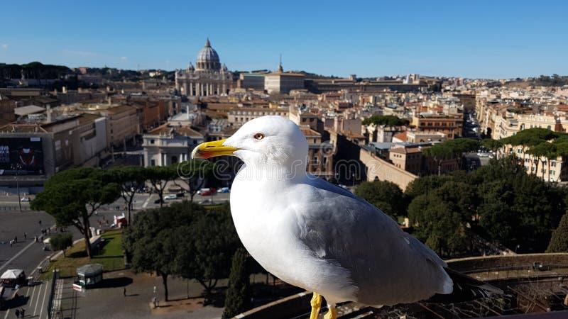 Via della Conciliazione, St Peter ` s Basiliek, het Vierkant van Heilige Peter ` s, vogel, meeuw, zeevogel, charadriiformes royalty-vrije stock afbeelding