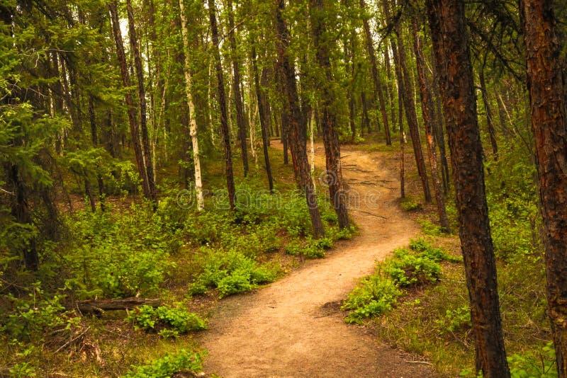 Via della foresta fotografia stock