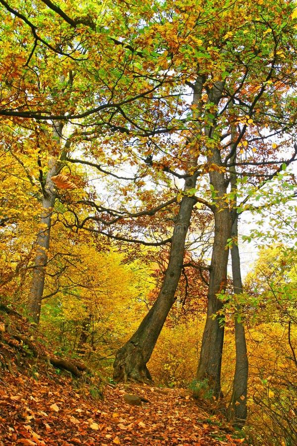 Via della foresta di autunno nei colori chiari. immagine stock libera da diritti