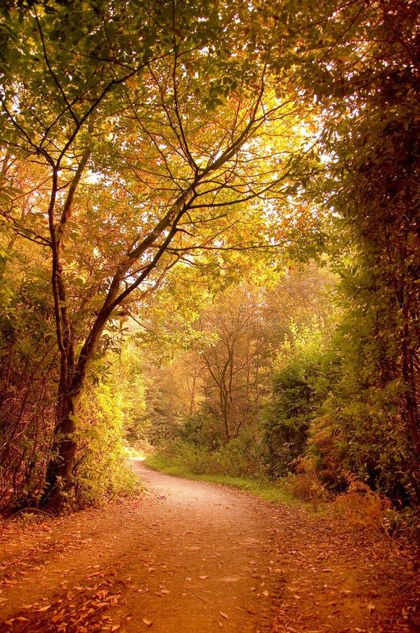 Via di autunno immagine stock