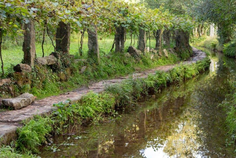 Via di pietra lungo il fiume nel fondo di legno leggiadramente della foresta Traccia tortuosa con le colonne di pietra Arché verd fotografie stock libere da diritti