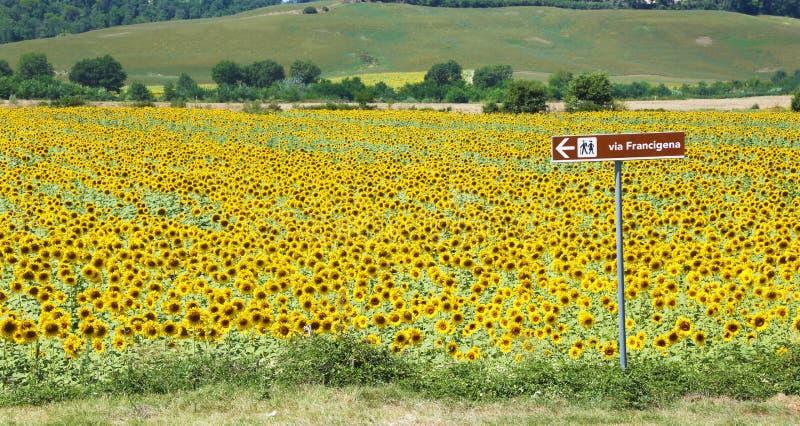 Via Francigena vägvisare- och solrosfält Tuscany arkivbild