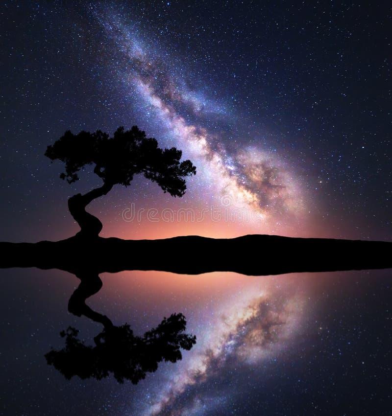 Via Lattea con l'albero solo sulla collina vicino al lago fotografia stock