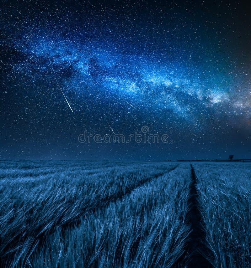 Via Lattea di stupore sopra il campo con grano alla notte immagini stock libere da diritti