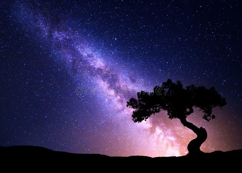 Via Lattea ed albero sulla collina fotografie stock libere da diritti