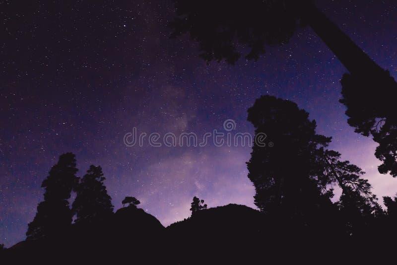 Via Lattea ed alcuni alberi nelle montagne Paesaggio di notte immagini stock